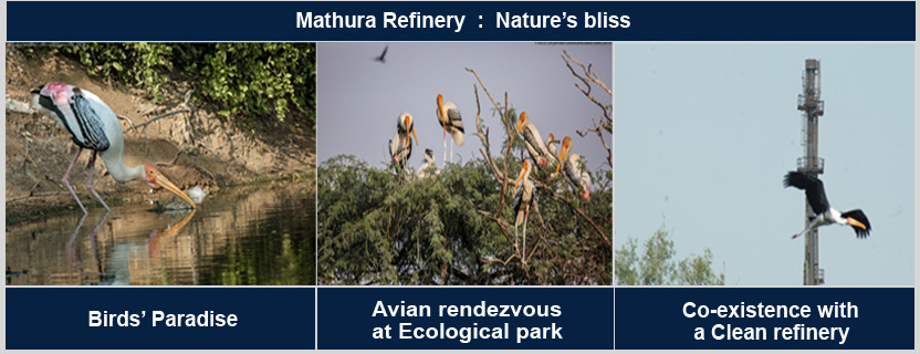 Mathura Rafinery :Nature's bliss